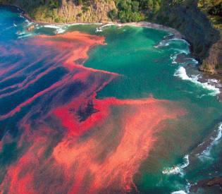 https://nkarlina.files.wordpress.com/2012/03/red-tides.jpg?w=300